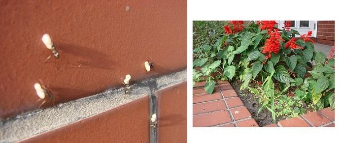 蟻の引っ越し