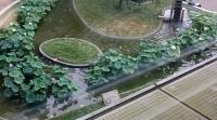 オオガハスの池を真上からみたようす