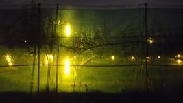 夜の梨畑♪
