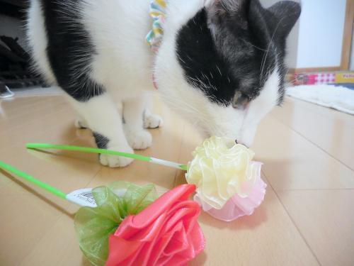 お花のじゃらし