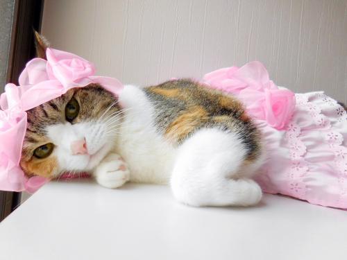 みくピンクスカート