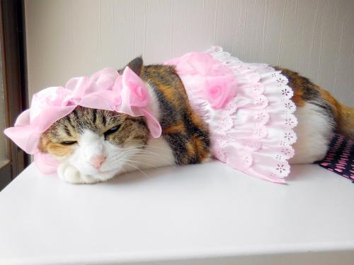 みくピンクスカート02