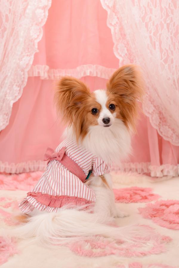 愛犬ヴィレッジ3