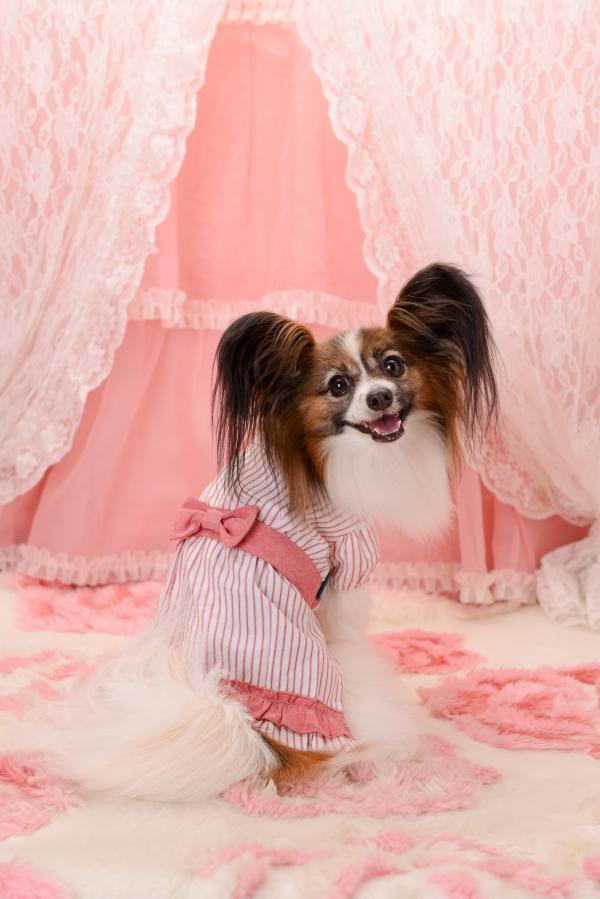 愛犬ヴィレッジ2