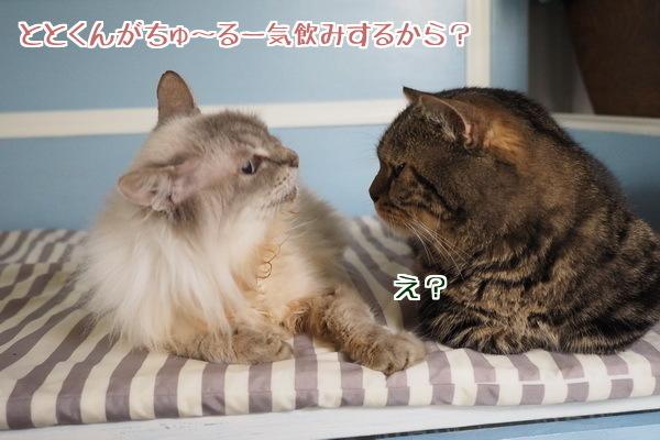 噂話に翻弄されるネコ達