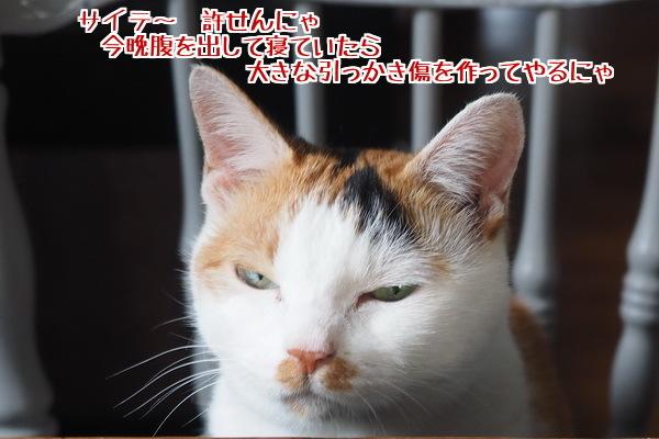 8 ひっかき