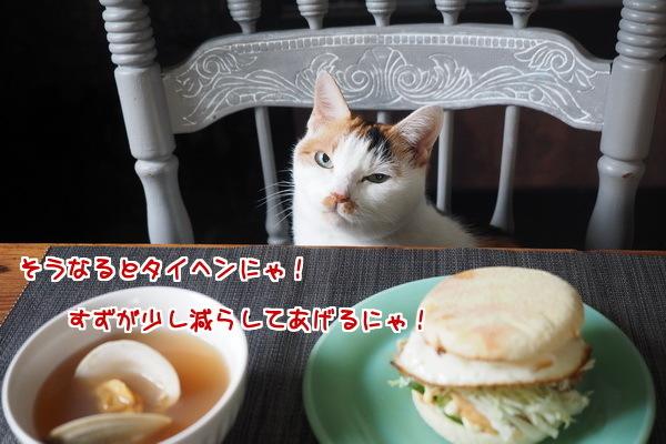 ネコの親切心