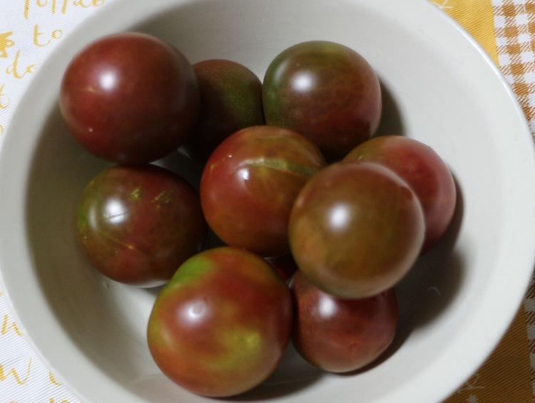 黒トマト 29.7.22
