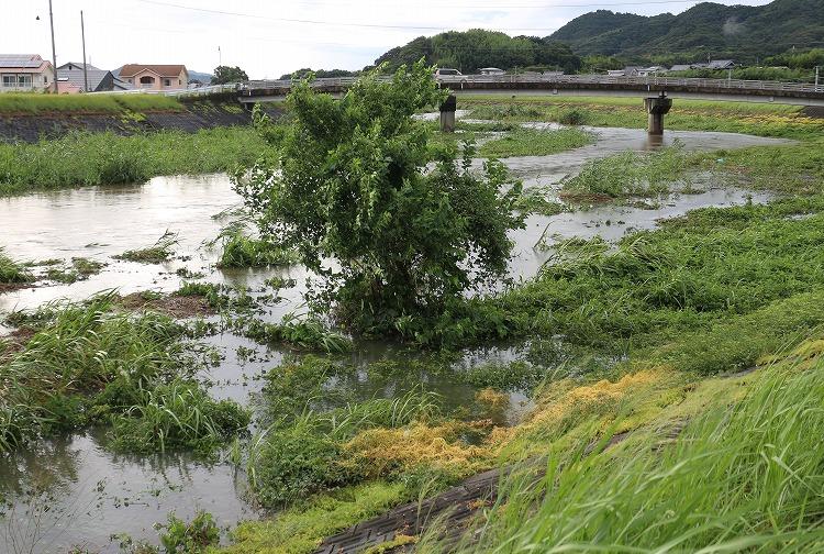 台風通過後高瀬川三野津橋 29.8.7