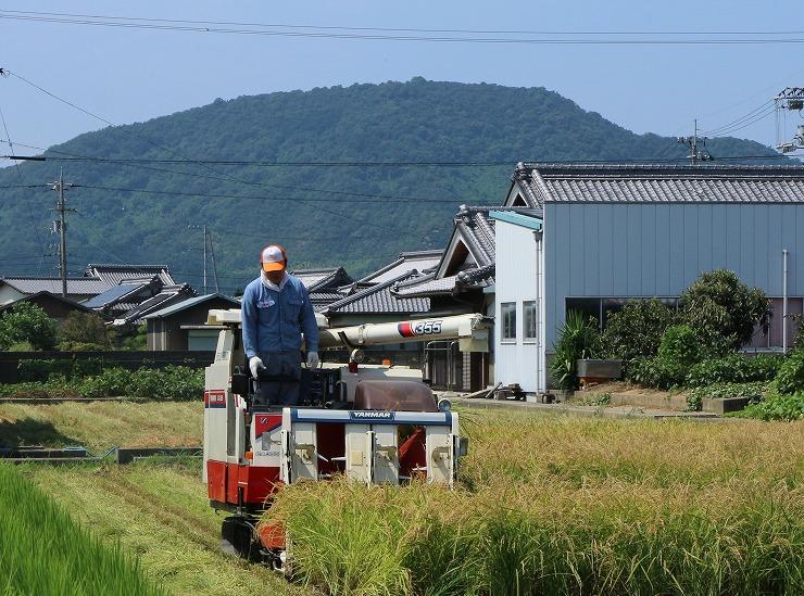 稲刈り コシヒカリ 29.8.27
