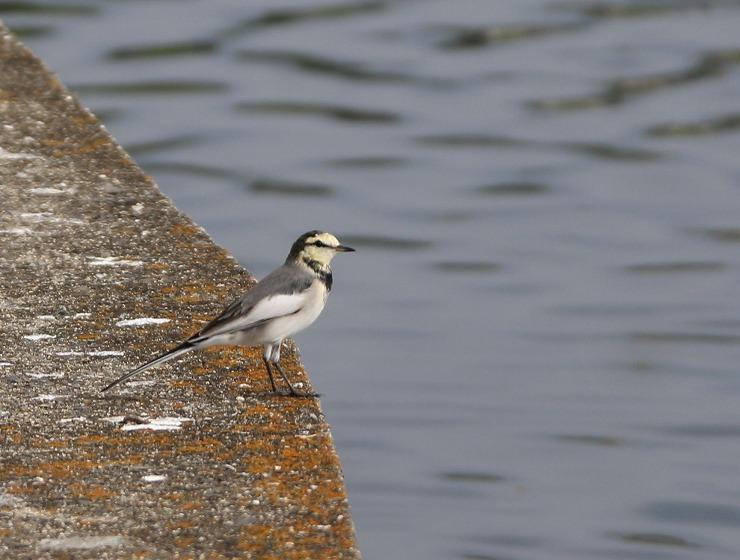 池の岸には色々な鳥が 29 9 14