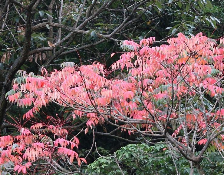 七宝山の紅葉始まり 29 9 11