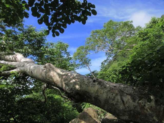 IMG1488JPG大木と緑