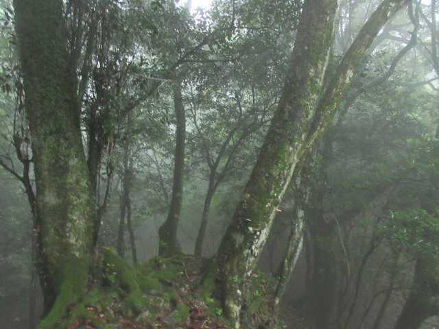 IMG1525JPG霧雨の樹林