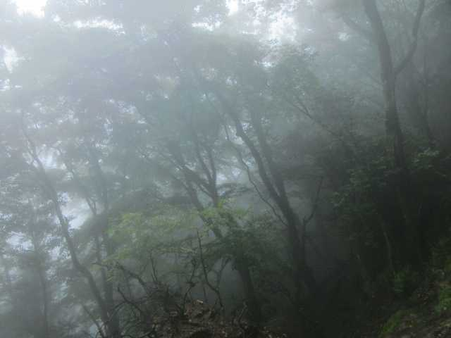 IMG1835JPG濃霧の林