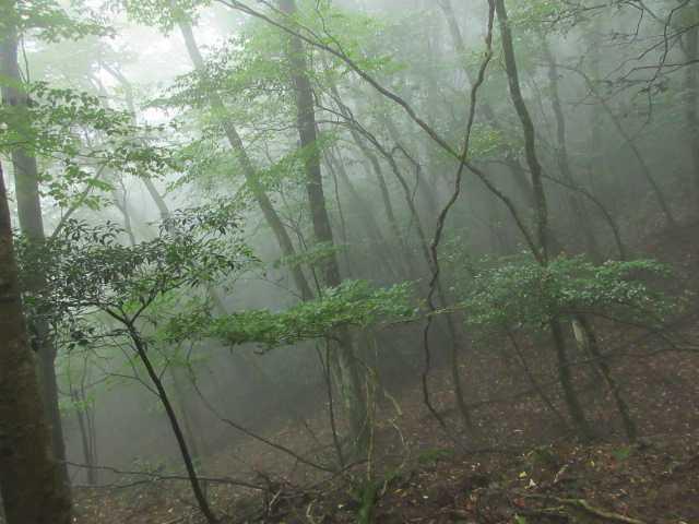 IMG1847JPG霧のモミジ谷