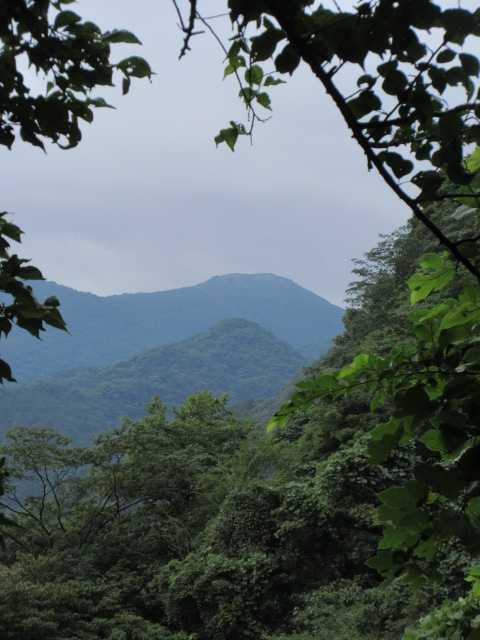 IMG1987JPG樹間より福智山