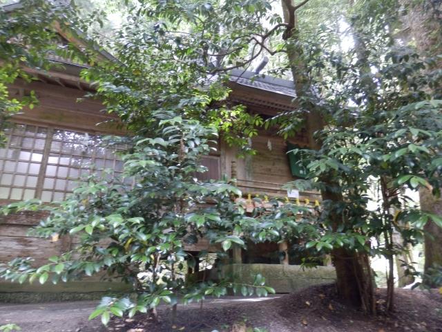 7.1金持ち神社 (20)_resized