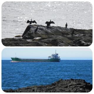 海鳥とタンカー