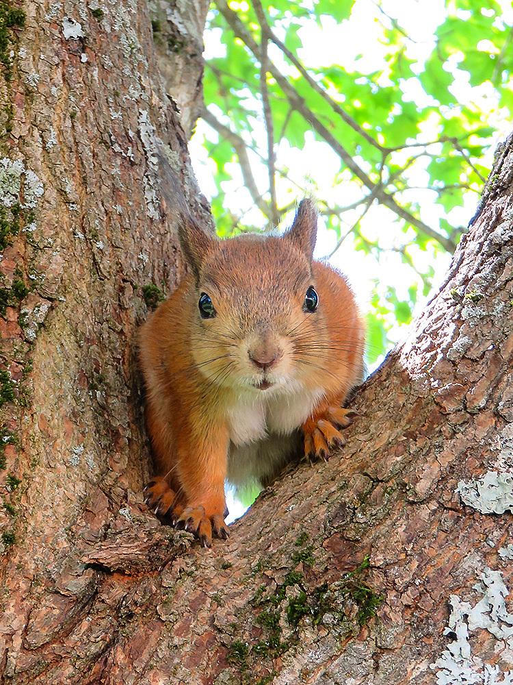 フィンランド 庭 リス Orava Squirrel 可愛い訪問者