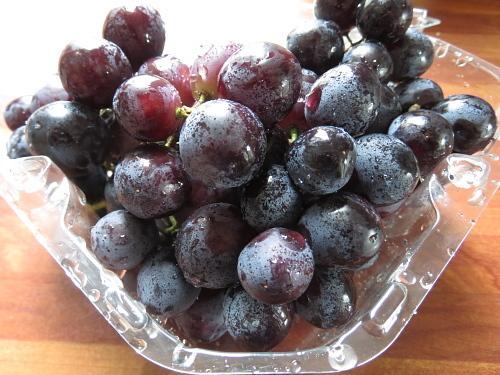 フィンランド ぶどう ブドウ 葡萄 Grape Rypäre