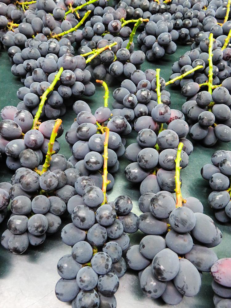 日本 葡萄 Grape ピオーネ