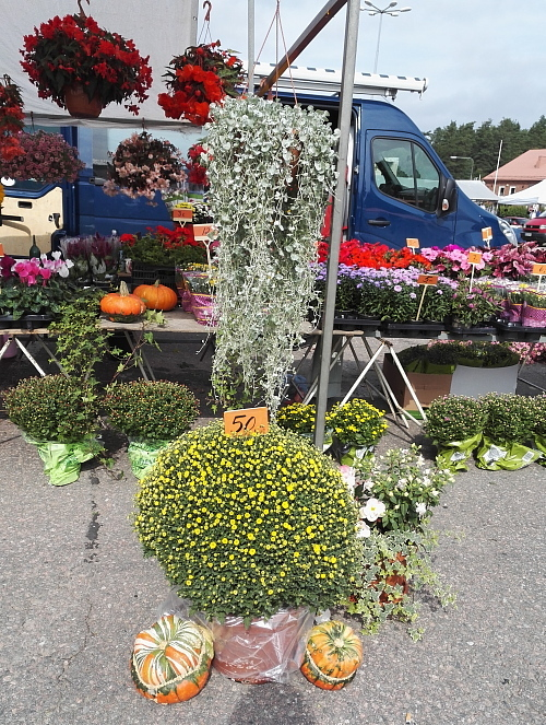 フィンランド マーケット市場 花屋 秋の花 Syyskukka