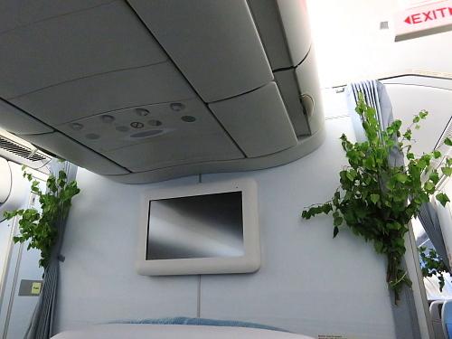 フィンエアー ヘルシンキ 福岡 夏至祭 白樺の木 アレルギー源