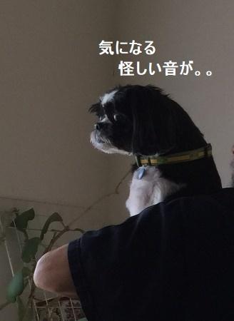 IMG_9270moji.jpg