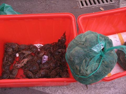 チャイ蟹4