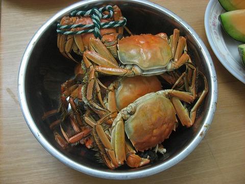 チャイ蟹5
