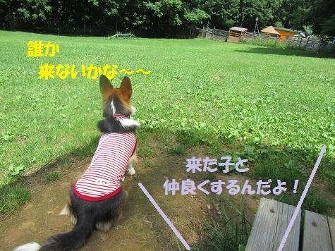 04170802IMG_0431.jpg