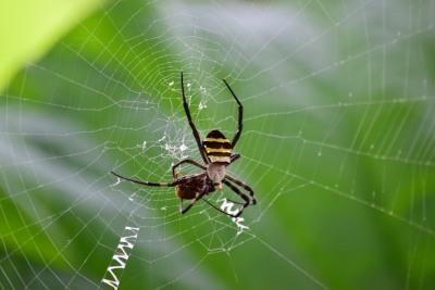蜘蛛DSC_0569