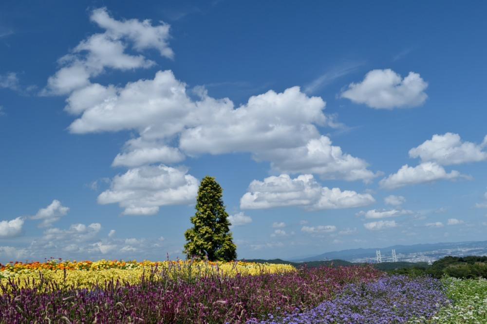 花畑木DSC_0058