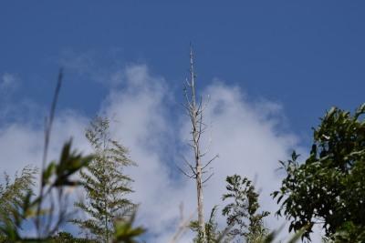 樹DSC_0322