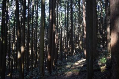 案内板樹林DSC_0264