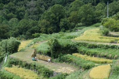 農作業DSC_0621