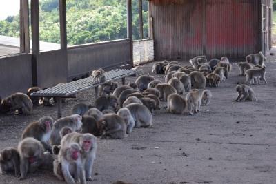 猿の群れDSC_0300