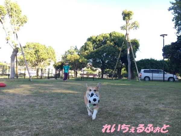 DPP_13583.jpg