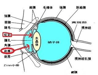 E7B6B2E8869CE589A5E99BA2-thumbnail2.jpg