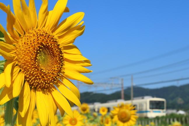 ATSU8703s.jpg