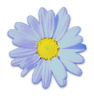 flower50.png