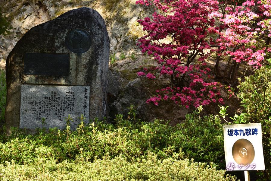 坂本九ちゃん4変更済