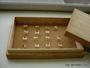 豊中市教育センター所蔵昆虫標本1 - 縮小