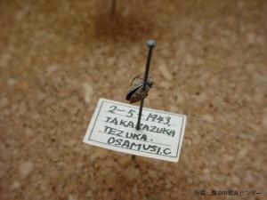 豊中市教育センター所蔵昆虫標本2 - 縮小