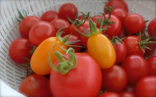 tomato170726-1
