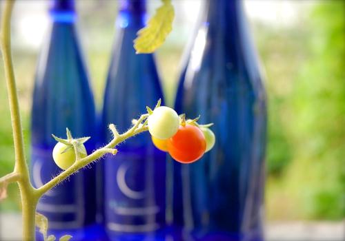 tomato170802-1