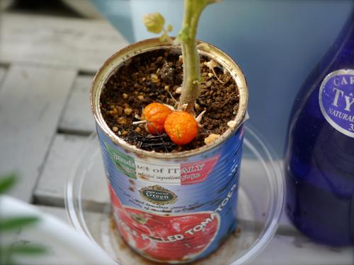 tomato170802-2