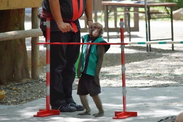 お猿さん201707220000003