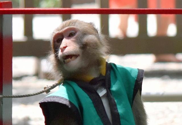 お猿さん201707220000006